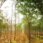 forest carbon verification and validation